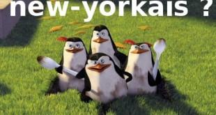 madagascar-pingouins