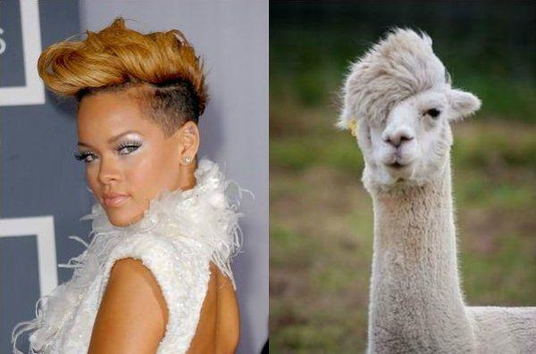 celebs-who-look-like-animals-1338129682-may-16-2012-600x397