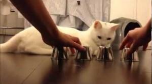 chat-intelligent-et-fourbe