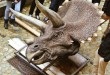 triceratops-musée-lyon