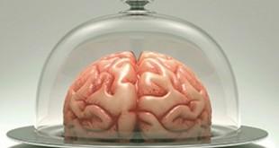 brainless-jerome-noirez-avis-gulfstream-electrogene