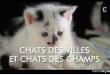 étude-sur-les-chats