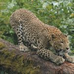 attractions-animalier-presentation-photo-image-18
