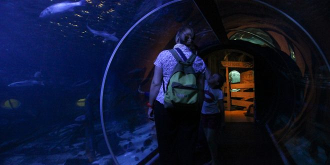 visite-sealife