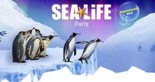 sea-life-ile-manchots-2017-nouveauté-idee-sortie
