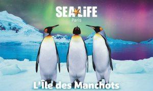 ile-des-manchots-arrivee-manchots-royaux-annonce-sea-life