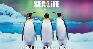 lile-des-manchots-sea-life-val-deurope